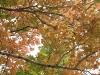 四季 - 秋